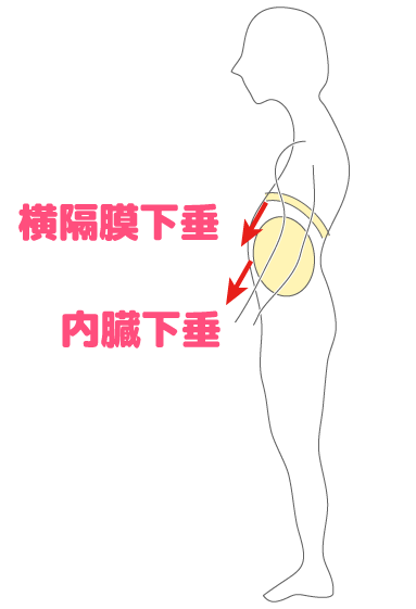 横隔膜や内臓の下垂が姿勢を悪くする原因となる図