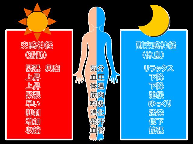 交感神経と副交感神経の働き