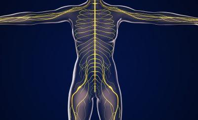 腰周辺の神経のイメージ