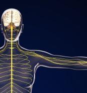 肩を通る神経のイメージ
