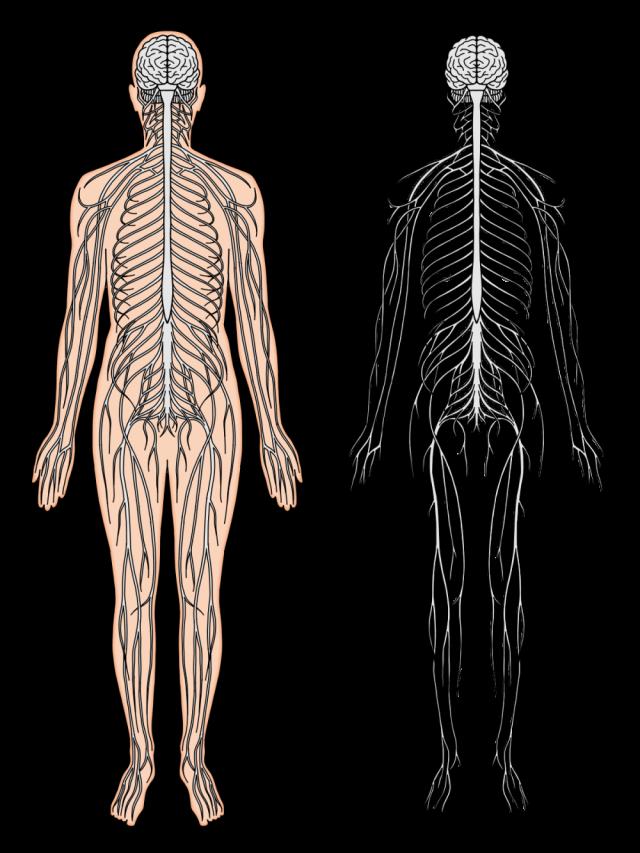 神経のイメージ